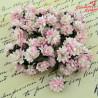 Kwiaty Astry 2 tone Baby Pink 10szt.  /82