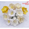 Kwiat wiśni MIX White/Cream 50sztuk zestaw    /100